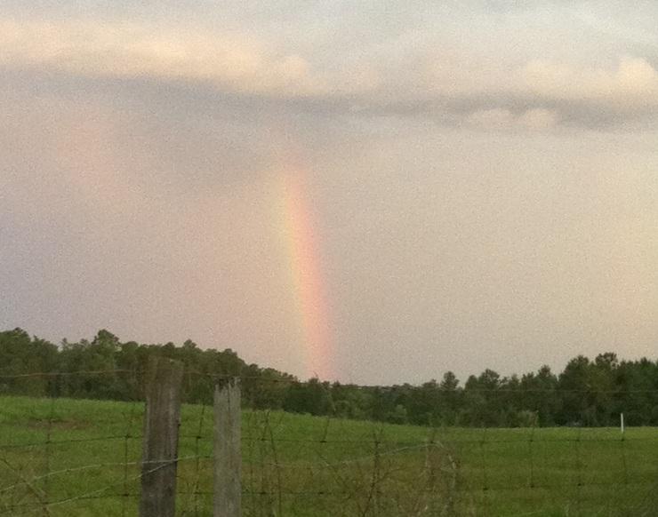 Rainbow - Copy